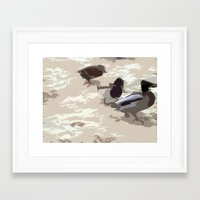 ducks Framed Art Prints featuring Ducks by Kimberley Shaw