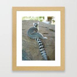 Julien of the Lemur Framed Art Print