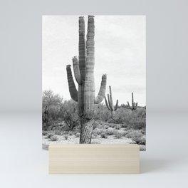 Desert Cactus / Scottsdale, Arizona Mini Art Print