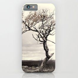 Lonely tree in autumn iPhone Case
