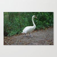 black swan Canvas Prints featuring Swan by DEB VINCENT
