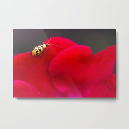 RUN ON RED LADY BUG Metal Print