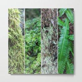 Green natural textures in BC Metal Print
