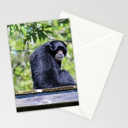 Wispy Whiskers Stationery Cards