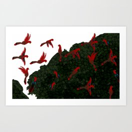 Red Parrots Arrive at the Fig Tree book illustration  Art Print
