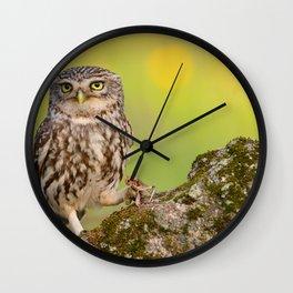 A little owl Wall Clock