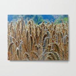 cornfield Metal Print