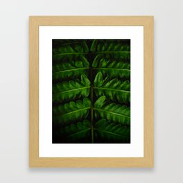 Close Up Of A Green Fern Leaf Intricate Patterns In Nature Against A Black Background Framed Art Print