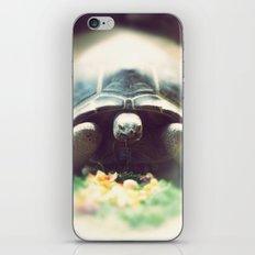 Acinixys Planicauda  iPhone & iPod Skin