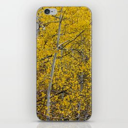 Quaking Aspen iPhone Skin