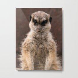 meerkat guard Metal Print