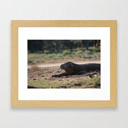 Komodo Dragon Framed Art Print