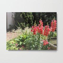 Snapdragons Metal Print