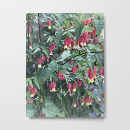 Red firecracker flower in Butchart's Garden Metal Print