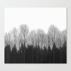 Trees in rows Canvas Print
