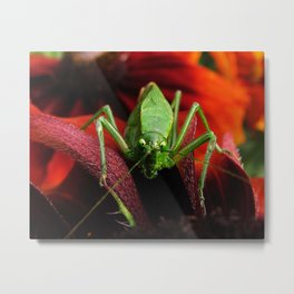 Green Katydid Metal Print