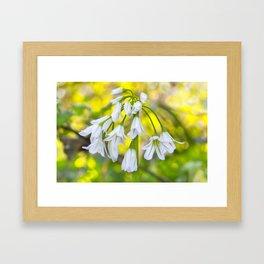 White woodland flora. Framed Art Print