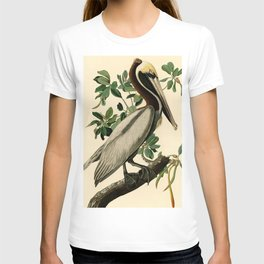 Brown Pelican (Pelecanus occidentalis) Scientific Illustration T-shirt