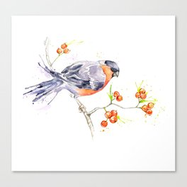 British Birds 2012 Series - Bullfinch Canvas Print