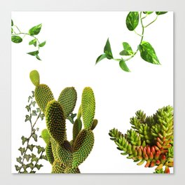Plants Canvas Print