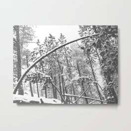 Forest Snowfall // Winter Tree Black and White Landscape Photography Backwoods Woodlands Woods Metal Print