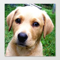 jake Canvas Prints featuring Jake  by North 10 Creations