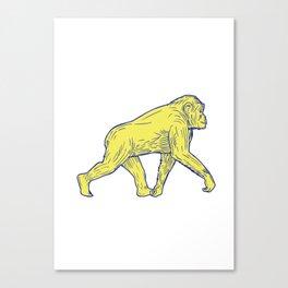 Chimpanzee Walking Side Drawing Canvas Print