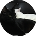 catsupercats