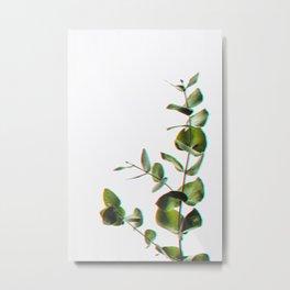 Botanical modern eucaliptus Metal Print