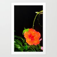hibiscus Art Prints featuring Hibiscus by Iris V.