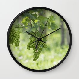 Bunch of grapes on vineyard Wall Clock