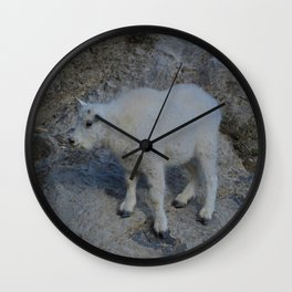 Baby mountain goat in the Rocky Mountains Wall Clock