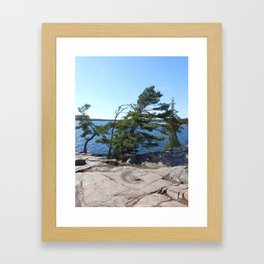 Wisping White Pines Framed Art Print
