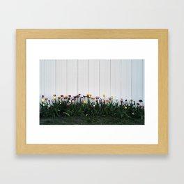 Tulips, Ottawa, Ontario, 2013 Framed Art Print