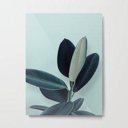 Ficus elastica - mint Metal Print