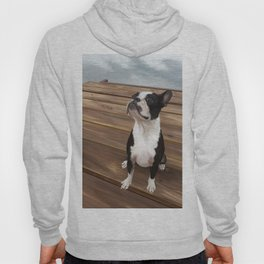 Boston Terrier 1 Hoody