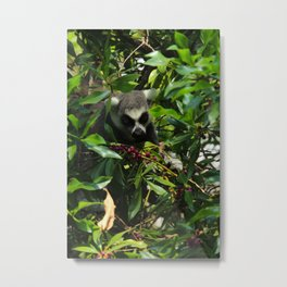 Lemur Berries Metal Print