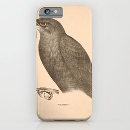 Vintage Print - Companion to Gould's Birds of Australia (1877) - Black Falcon iPhone Case