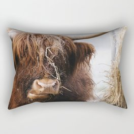 Highland cow feeding on straw on a frosty winters morning. Norfolk, UK. Rectangular Pillow