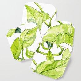 Devils Ivy Illustration Coaster