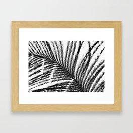 Plume- A Feather Study 2 Framed Art Print