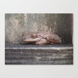 Smiling Frog Canvas Print