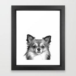 Black and White Chihuahua Framed Art Print