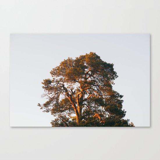Half Tree Canvas Print