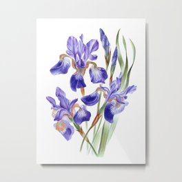 Watercolor hand painted Irises sibirica Metal Print