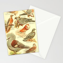 William Playne Pycraft - A Book of Birds (1908) - Plate 17: Pigeons and Doves Stationery Cards