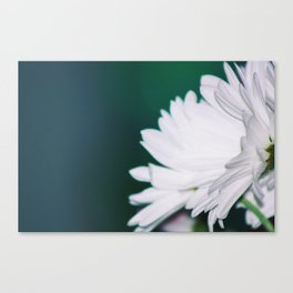 up close white flowers Canvas Print
