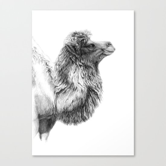Bactrian Camel G079 Canvas Print