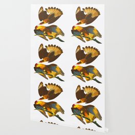 Caracara Eagle John James Audubon Vintage Scientific Birds of America Illustration Wallpaper