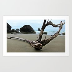Drift Wood Paradise  Art Print